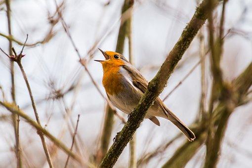 march 2017 pic bird singing